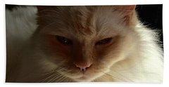 Honey, My Ragdoll Cat Beach Towel by Patricia E Sundik