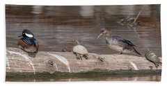 Hooded Merganser Pair Resting Dwf0175 Beach Towel