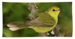 Hooded Warbler Female Beach Sheet by Alan Lenk