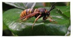 Hornet Moth Beach Towel