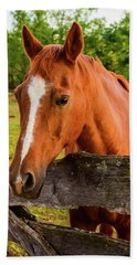 Horse Friends Beach Towel