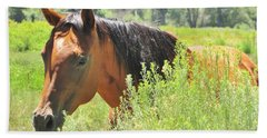 Horse Portrait Beach Sheet by Marilyn Diaz