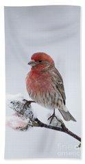 House Finch And Spring Snowfall - D010346 Beach Sheet