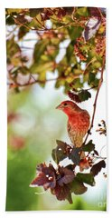 Beach Sheet featuring the photograph House Finch Hanging Around by Kerri Farley