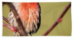 House Finch In Full Color Beach Towel