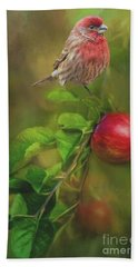 House Finch On Apple Branch 2 Beach Sheet