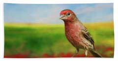 House Finch Beach Towel by Steven Richardson