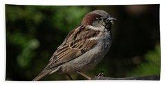 House Sparrow 2 Beach Sheet