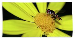Beach Towel featuring the photograph Hoverfly On Bright Yellow Daisy By Kaye Menner by Kaye Menner