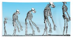 Human Evolution  Beach Towel