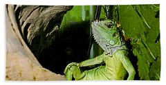 Humorous Pet Iguana Photo Beach Sheet by Carol F Austin