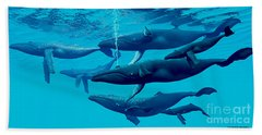 Humpback Whale Group Beach Towel by Corey Ford