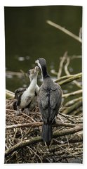 Hungry Pied Shag Chicks Beach Sheet