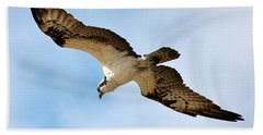 Hunter Osprey Beach Towel by Carol Groenen