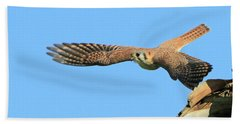 Hunting Kestrel Beach Towel