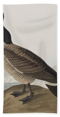 Hutchins's Barnacle Goose Beach Towel by John James Audubon