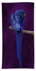Hyacinth Macaw Panoramic Beach Towel
