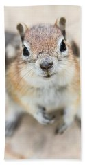 Beach Towel featuring the photograph Hypno Squirrel by Chris Scroggins