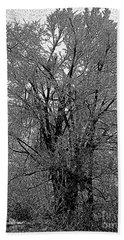 Iced Tree Beach Towel
