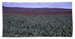Icelandic Field Of Rutabaga Beach Sheet