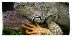 Beach Towel featuring the photograph Iguana by Jacqui Boonstra