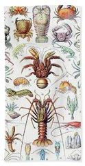 Illustration Of Crustaceans, 1923 Beach Towel