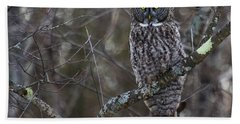 I'm Hungry- Great Gray Owl Beach Towel