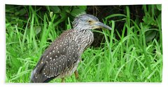 Beach Towel featuring the photograph Immature Black Crown Heron by Rosalie Scanlon