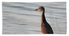 Immature Black-crowned Night-heron Mt Sinai New York Beach Towel