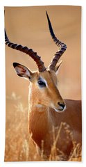 Impala Male Portrait Beach Towel