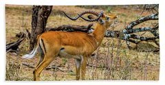 Impala On The Serengeti Beach Towel