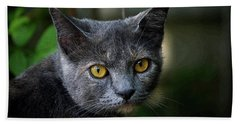 In The Know Pet Art Beach Towel