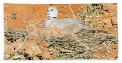 Beach Towel featuring the photograph Eurasian Collared Dove On Nest by Tam Ryan