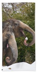 Indian Elephants Eating Snow Beach Sheet