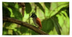 Indian Paradise Flycatcher Beach Towel
