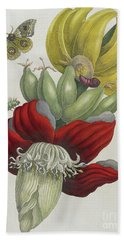 Inflorescence Of Banana, 1705 Beach Towel by Maria Sibylla Graff Merian