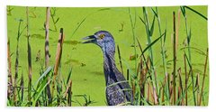 Inmature Black Crowned Heron. Beach Towel