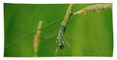 Beach Towel featuring the photograph Insect On Straw, May 2016.  by Leif Sohlman