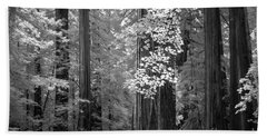 Inside The Groves Of The Redwoods Beach Towel by Craig J Satterlee