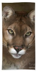 Intense Cougar Beach Towel