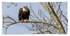 Intent Bald Eagle Beach Towel