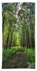 Beach Towel featuring the photograph Into The Forest by DJ Florek