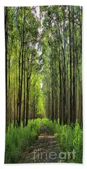 Beach Towel featuring the photograph Into The Forest I Go by DJ Florek