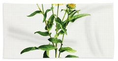 Inula Beach Towel