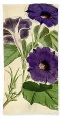 Ipomoea Nil Beach Towel