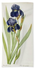 Iris Germanica Beach Towel by Pierre Joseph Redoute
