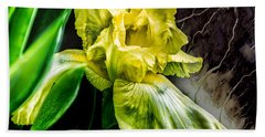 Iris In Bloom Two Beach Towel