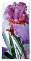 Watercolor Of A Tall Bearded Iris In Pink, Lilac And Red I Call Iris Pavarotti Beach Towel