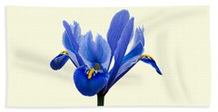 Iris Recticulata Transparent Background Beach Sheet by Paul Gulliver