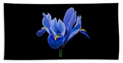 Iris Reticulata, Black Background Beach Sheet by Paul Gulliver